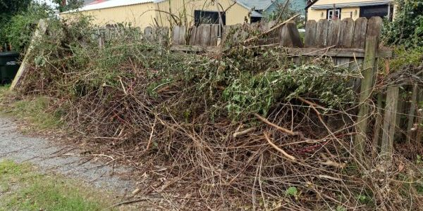 Yard waste in need of yard waste removal services